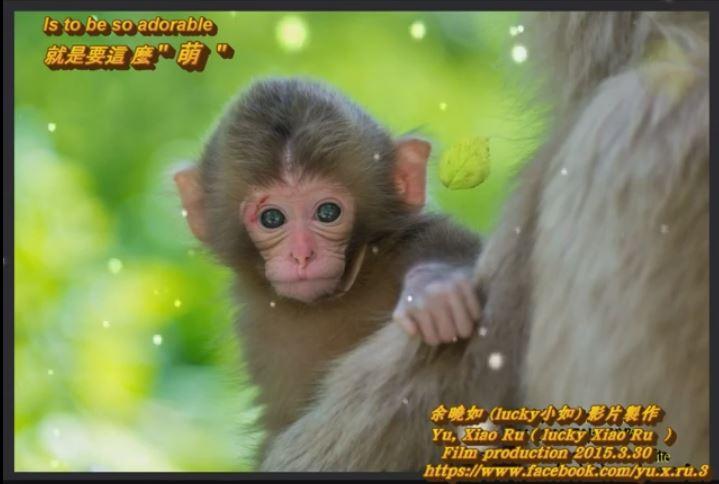 就是要這麼 萌 -好可愛的 小猴子