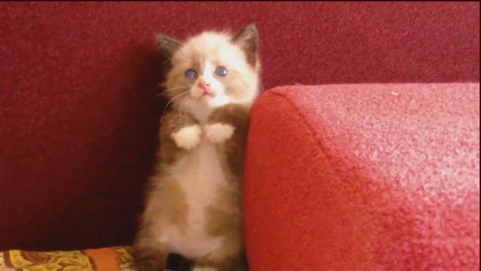 好可愛的貓喔!