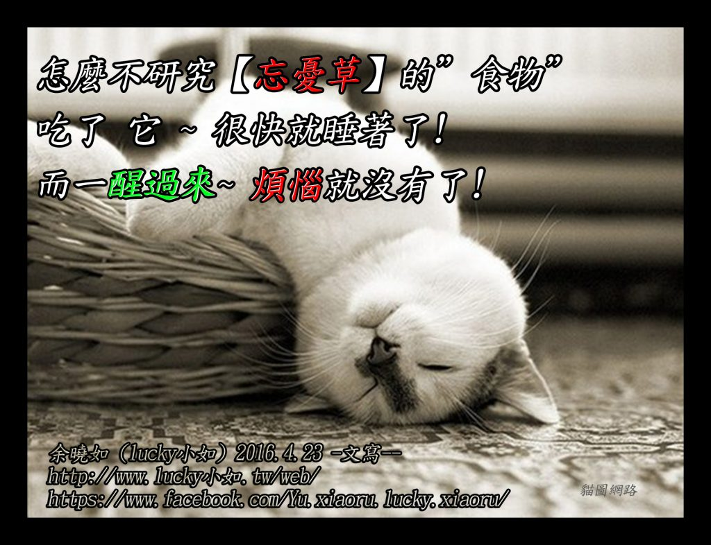 """怎麼不研究【忘憂草】的""""食物"""" 吃了 它 ~ 很快就睡著了! 而一醒過來~ 煩惱就沒有了!"""