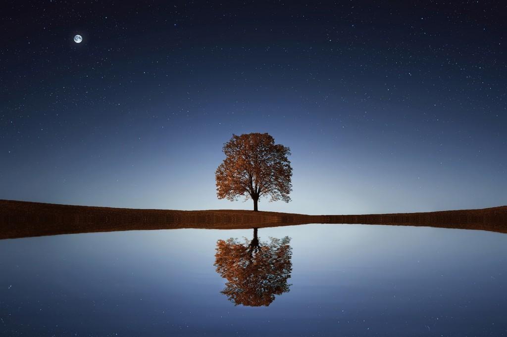 Bessi_Tree on Calm Lake_YkVkSWI