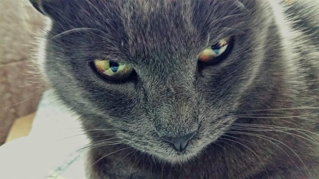 Katia ß_Cat Eyes_YkVnRWI