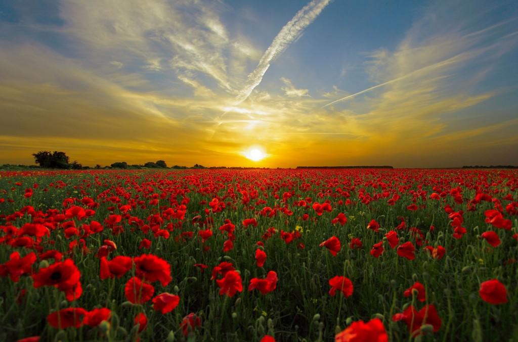 美麗的風景 是人不可缺 的解 心之物