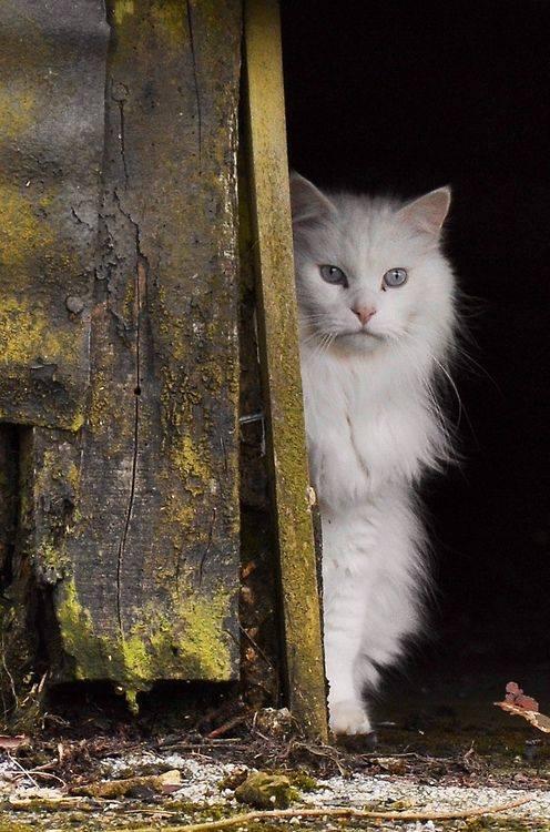 貓的寫真 攝影!