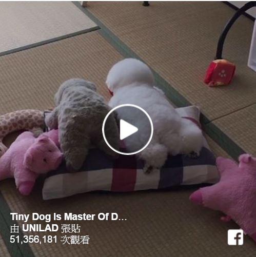就是要一起睡!狗狗和牠心愛的娃娃超可愛。