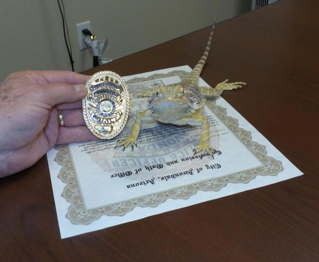 「蜥蜴」領警徽宣誓 嗅覺竟比警犬還厲害