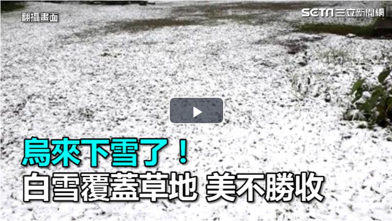 烏來下雪了! 樹木、草地被白雪覆蓋美不勝收