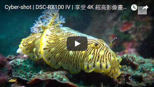 享受 4K 超高影像畫質讓您如同置身海底世界