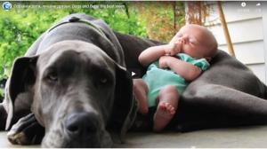 狗和孩子,最好的朋友。狗和寶貝,最好的視頻。