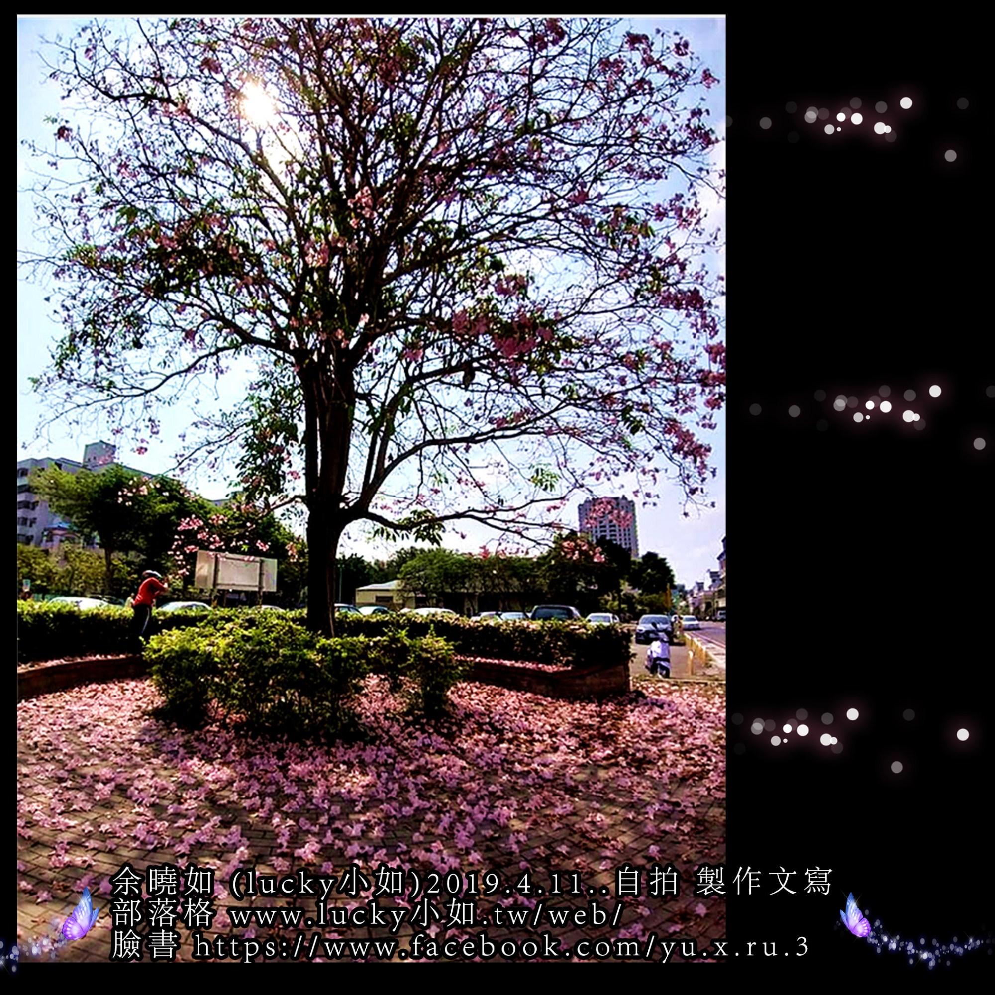 好美的樹花景色喔! 好像書裡說的 【最美的人間 四月天】